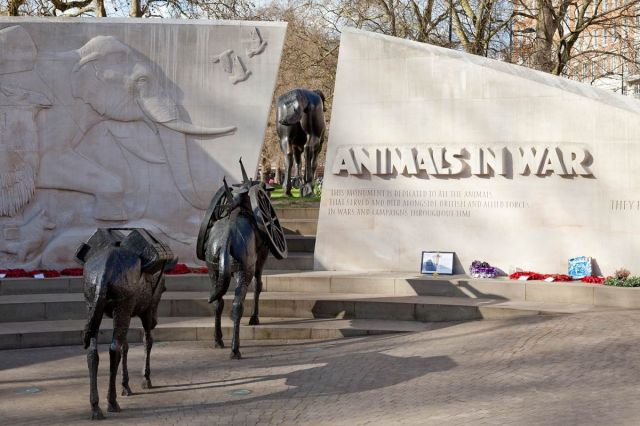 Animals in War Memorial - They had no choice.